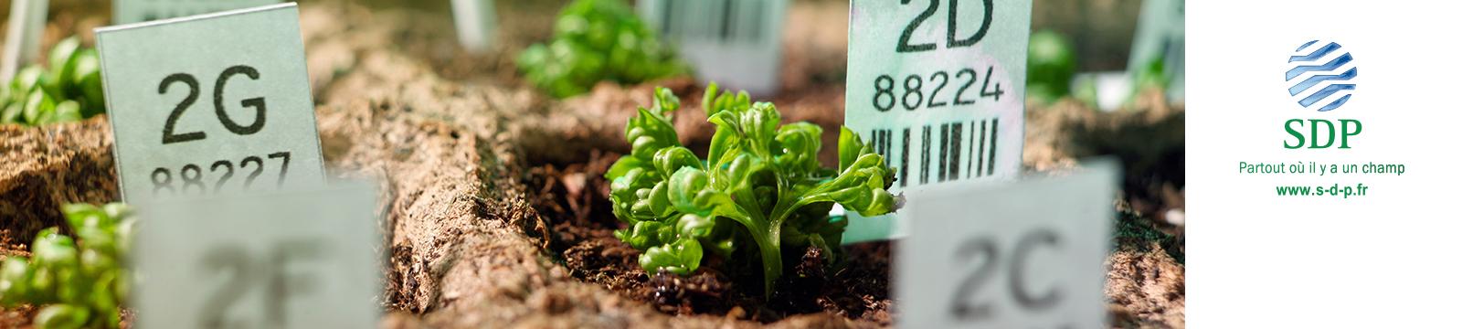 Трэйдкорп /  Sapec Agro Business приобретёт французскую компанию SDP