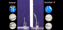 Преимущества Гумистара в развитии корневой системы